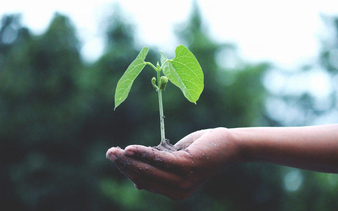 groei medewerker